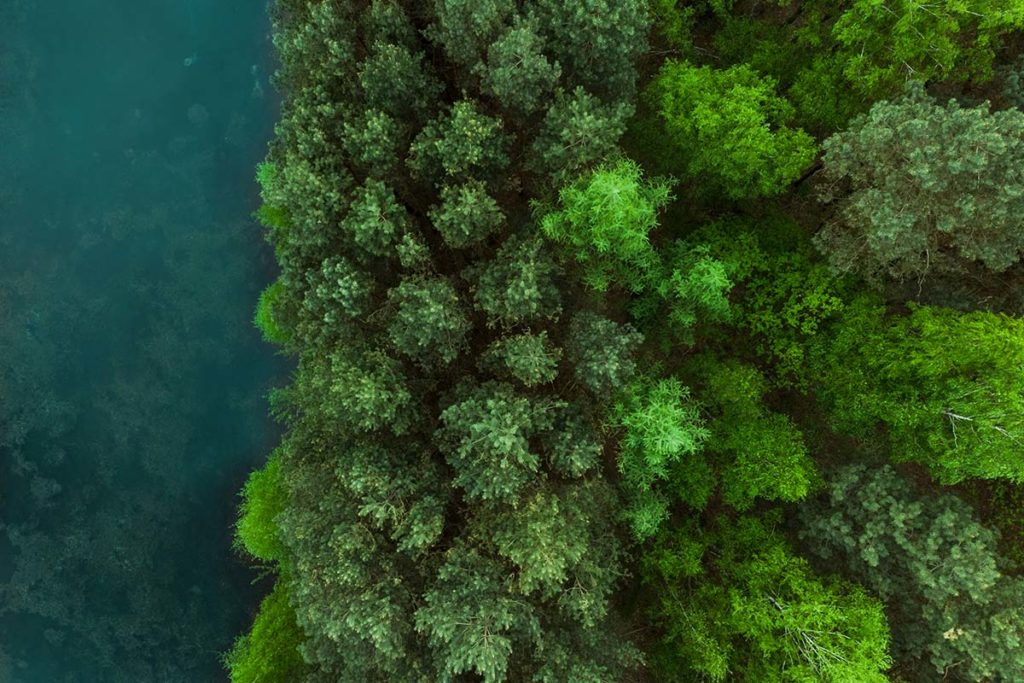 Aerial perspective on a forest of trees and a ledge to water below.