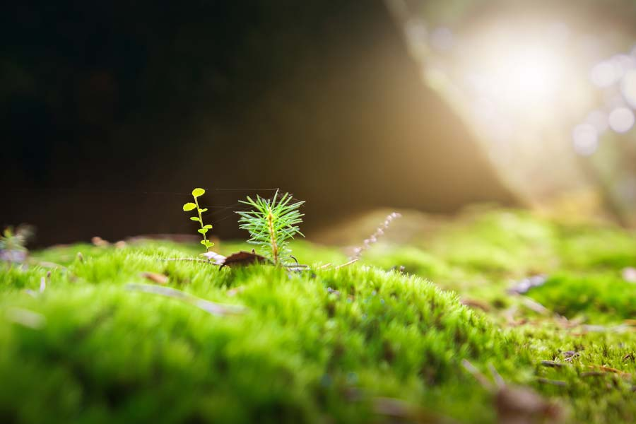 A small green plant pokes up out of a sea of green moss.